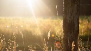 field-meadow-summer-625-985x550