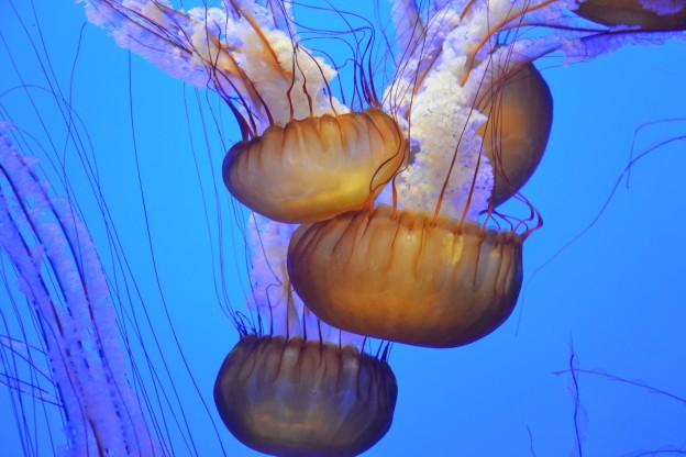 Understanding underwater photography