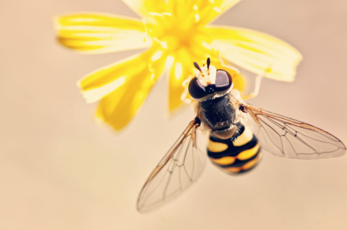 The photography buzz around bees