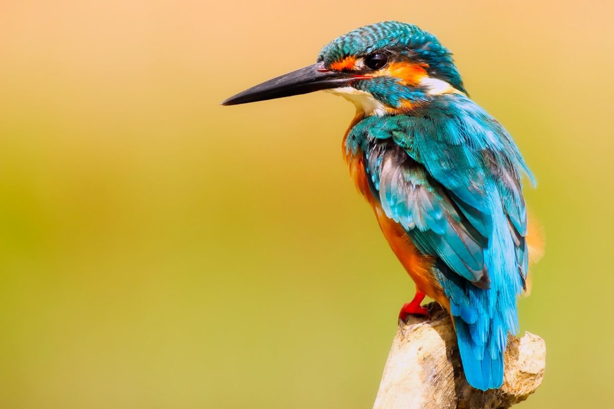 Bird photography: the majestic beauty of UK birds